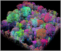 AI MAPS BIOLOGICAL RICHES OF THE RAINFOREST